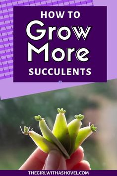 Do you ever have a leaf fall off your succulent? Why don't you propagate it?! LEARN HOW TO PROPAGATE SUCCULENTS THE EASY WAY! Succulent Propagation | How to Grow More Succulents | How to Propagate Succulents | Propagate Succulents From Leaves, Growing Succulents, Cacti And Succulents, Succulent Potting Mix, Succulent Care, House Plants Decor, Plant Decor, Apartment Plants, Best Indoor Plants