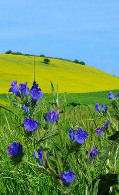 Fiori e colori, in primavera.Daunia Tavoliere  SanSevero Puglia Apulia