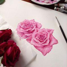 In progress #rose #botanicalart #watercolor