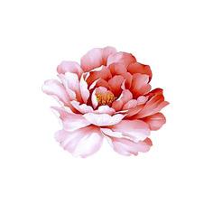 Gorgeous Tiny Flower Tattoos For Ladies