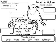 Label the Picture FREEBIES! Includes Animal Characteristics, Oviparous Animals and Adult and Baby Animals.
