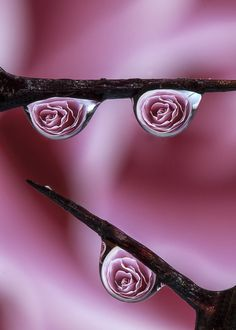 Roses Are Red Drops by Dave Wood, via 500px