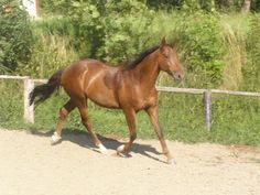 stáj Podkova   koně Horses, Animals, Animales, Animaux, Animal, Animais, Horse