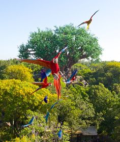 """New """"Winged Encounters — The Kingdom Takes Flight"""" show coming to Disney's Animal Kingdom this summer!"""