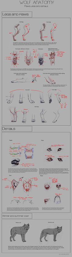 Wolf Anatomy - Part 4 by Autlaw on deviantART via PinCG.com: