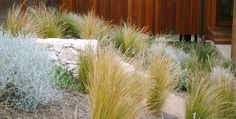 JRLD specialises in contemporary Australian garden design, consultancy and landscape management for coastal, urban, rural and resort outdoor living spaces. Based in Queensland's Noosa and Victoria's Mornington Peninsula regions. Australian Garden Design, Contemporary Garden Design, Landscape Design, Plant Design, Native Plants, Garden Inspiration, Earthy, Melbourne, Outdoor Living