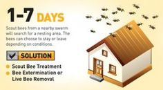 Honeybee Activity After 1 to 7 Days On Your Property.