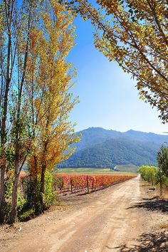 Autumn, Ruta del Vino (Wine Route), Valle de Colchagua, Santa Cruz, O'Higgins Region, Chile