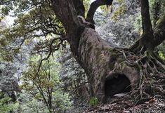 Doupný strom Pohansko Plants, Plant, Planets