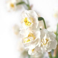 bloemenhoudenvanmensen.nl    Witte Narcis Bridal Crown    project 365    © Mieke de Weert