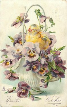 EASTER WISHES chick faces left in basket of purple pansies with yellow centres