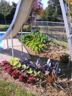 Winter Vegetable Garden | Winter Vegetable Gardening