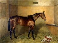 Velocity a bay racehorse by Alfred Grenfell Haigh