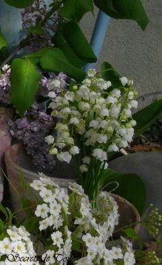 Lilly of the Valley and Lilacs. Lilly of the Valley was one of the flowers I used in my bridal bouquet.