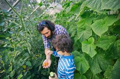 Father and son with tomatoes and cucumber on allotment