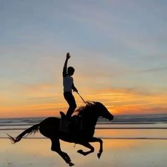 Horse Videos, Horse Stables, Beautiful Places To Travel, Sunset Photography, Beautiful Horses, Videos Funny, Dream Life, Animals, Food