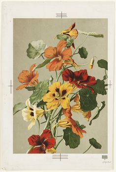 https://flic.kr/p/86NeE6 | Nasturtiums | File name: 07_11_000433 Title: Nasturtiums Creator/Contributor: Fisher, Ellen T. (artist); L. Prang & Co. (publisher) Date issued: 1861-1897 (approximate) Copyright date: Physical description note: Genre: Chromolithographs; Still life prints Location: Boston Public Library, Print Department Rights: No known restrictions
