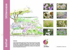 GvE Pflanzkonzept Blütenoase World, Plants, The World