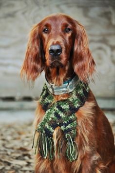 Reminds me of my old Irish Setter, Rusty. I loved that dog! He was amazing! May you rest in peace ol' boy <3