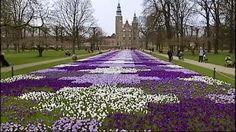 Copenhagen, Denmark - Crocuses planted in mass - The Rosenborg Castle Garden is the country's oldest royal garden & was embellished in the Renaissance style by Christian IV. The castle was originally built as a country summerhouse in 1606 & is an example of Christian IV's many architectural projects. It was built in the Dutch Renaissance style, typical of Danish buildings during this period, & has been expanded several times, finally evolving into its present condition by the year 1624.