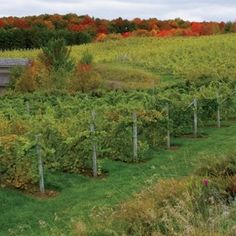 Plan a fun summer trip to one of Michigan's four major wine counties! | Michigan Agriculture