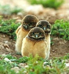 Owlets                                                                                                                                                                                 More