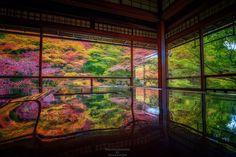 """""""「色彩を写す」 先週訪れた瑠璃光院 書院二階より。 まだピークではありませんでしたが、色とりどりの紅葉を楽しむことができました。 #瑠璃光院 #京都 #紅葉"""" Great View, Kyoto, Autumn Leaves, Aquarium, Scenery, Culture, Japan, Amazing, Painting"""