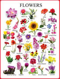 เรียนภาษาอังกฤษ ความรู้ภาษาอังกฤษ ทำอย่างไรให้เก่งอังกฤษ Lingo Think in English!! :): คำศัพท์ภาษาอังกฤษน่ารู้เกี่ยวกับดอกไม้ - Types of ...