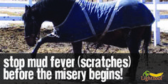 Find out what causes equine mud fever and how to prevent it.