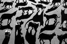 Shadow Cats or Cats Shadows