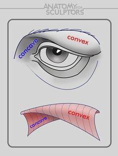 Slikovni rezultat za anatomy next eye construction art