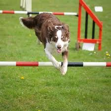 #AgilityTraining is great exercise for you and your dog.