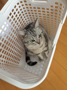 cat ♥  my hiding spot has holes - they'll see me