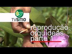 tvsitio - YouTube