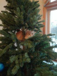Сидит на елке кот ученый  #зооград #zooizh #зооград.рф #товарыдляживотных #зоомагазин #ветаптека #Izhevsk #инстакот #котики #безкотаижизньнета #catsfoto #instacat #вселюбяткотиков #новыйгод2018