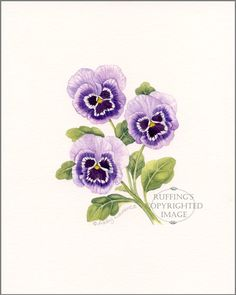 Purple Pansies Original Watercolor Floral Painting by Abby Laurence