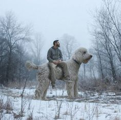 All dogs should be this size (but yes, Photoshop has been extensively used).