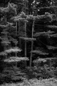 https://flic.kr/p/xKHmzN | Nichols Arboretum - No. 1, Ann Arbor, MI, August, 2015 | NAP_Canon EOS 5DS R_20150825_013A0451_0196-Edit-2.tif