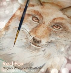 Red Fox  - Animales | Dibujando.net