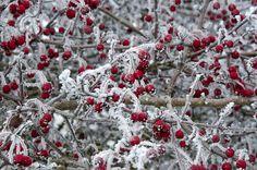 berries & white