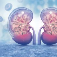 Ten Things to Know About Kidney Disease Aloe Vera, Kidney Failure Causes, Human Kidney, Easy Love Spells, Trigger Point Therapy, Body Joints, Spiritual Meaning, Kidney Health, Chronic Kidney Disease