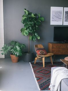 A split-leaf philodendron and a fiddle leaf fig call this living room home.                                                                                                                                                                                 Mehr