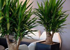 Grønne planter gir liv og stemning inne.