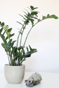 Low Lights Plants And Indoor On Pinterest