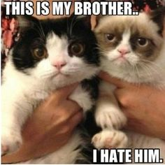Grumpy Cat.♡