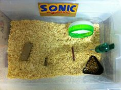 day 167: Sonic's new home