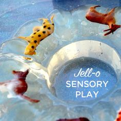 Try jello sensory play for a fun and engaging sensory experience for toddlers and preschoolers. Winter Activities For Toddlers, Toddler Learning Activities, Sensory Activities, Infant Activities, Animal Activities, Indoor Activities, Sensory Bins, Sensory Play, Sensory Table