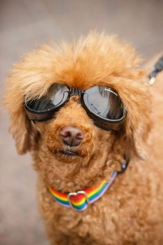 Villakoira Fifty Shades Of Gay tapahtumassa Narinkkatorilla | Hanhirova Melissa | 2015 | Finnish Heritage Agency | CC BY European Union Members, Fifty Shades, Round Sunglasses, Gay, Dogs, Fashion, Moda, Fashion Styles, Doggies