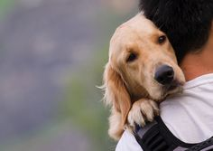 Lost Pet? Here's How to Bring Your Friend Home Again