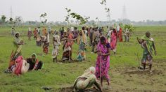 India Has Planted Nearly 50 Million Trees In 24 Hours | IFLScience